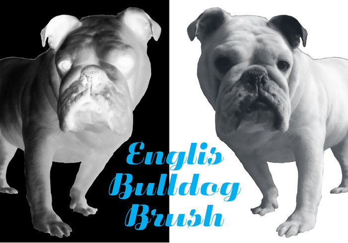 English Bulldog Brush