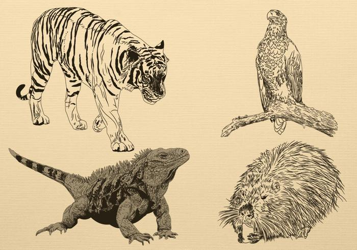 Hand Drawn Animal Brush Pack