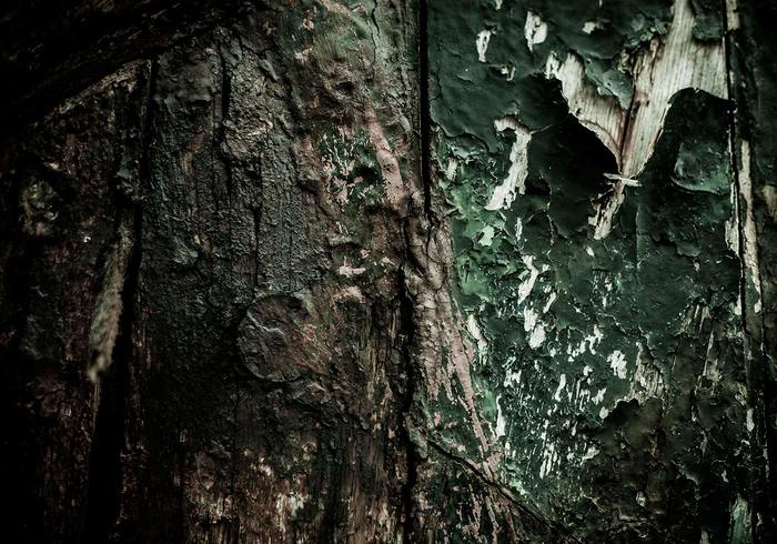 Texture du bois putréfié