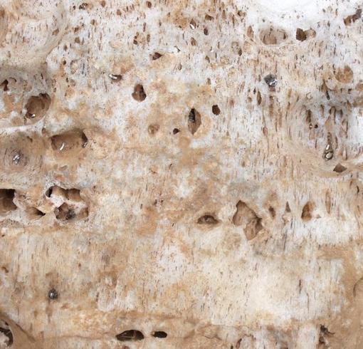 Salt Lick Texture
