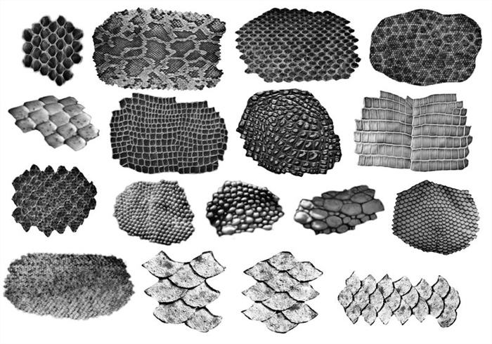 Scales Brushes