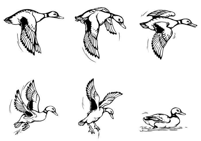 Vliegende eendborstelspak