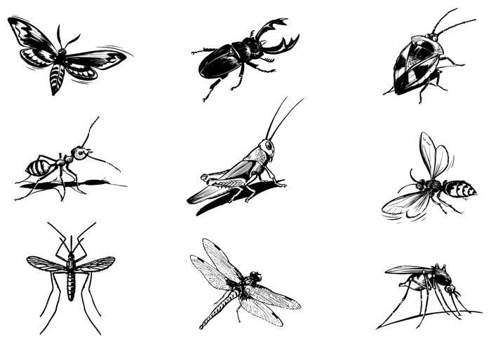 Various Insect Brushes Pack