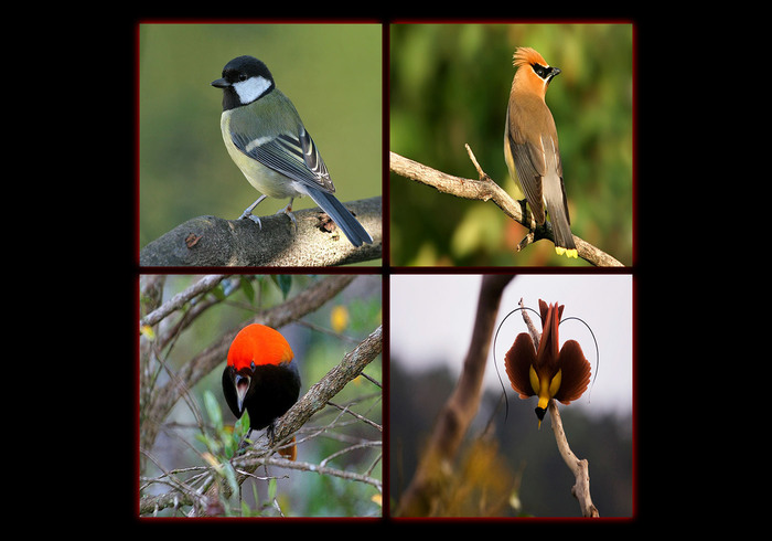 Birds In Paradise Collage