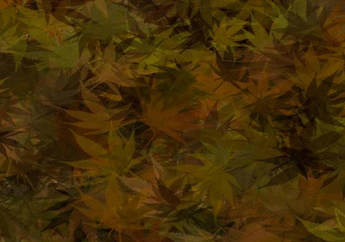 Cannabis Camuflaje