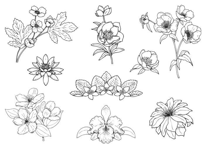 Paquete de cepillos de flores dibujados a mano