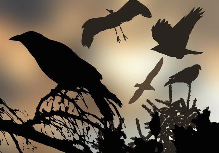 18 Brosses d'oiseaux