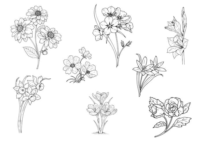 Hand Drawn Flower Brushes Pack Two