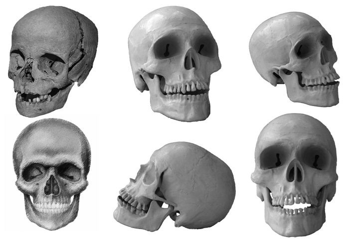 10 Creepy Skulls Brushes