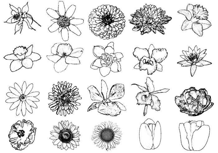 Ink Drawing Flower Brushes