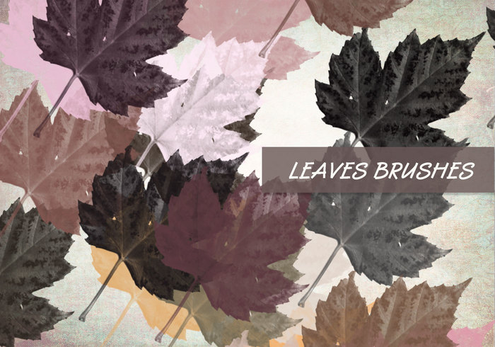 Ensemble de brosses PS Leaves