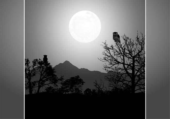 Owl By Full Moon PSD Background