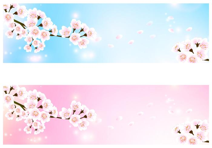 Cherry Blossom Banner Background Pack