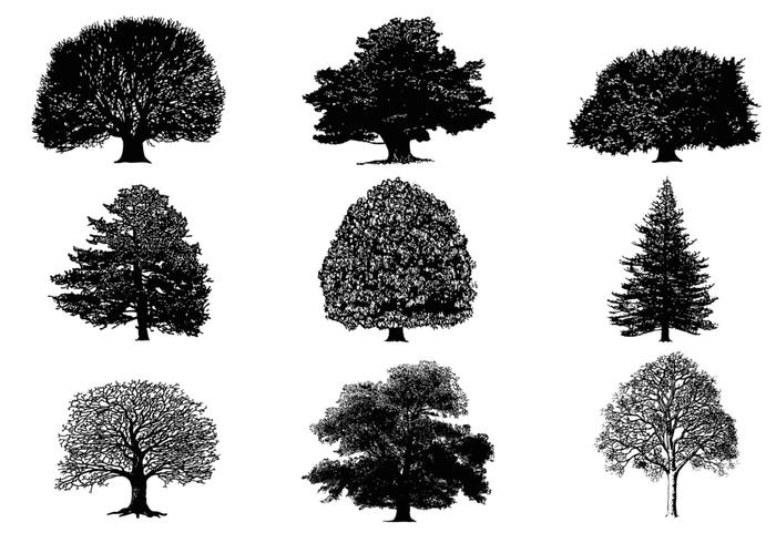 Paquete Silhouette Tree Brushes