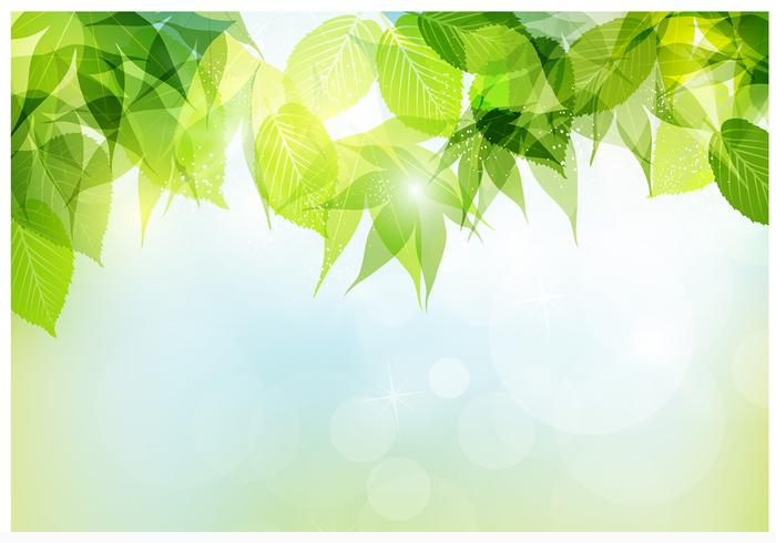 Bokeh spring leaves psd background