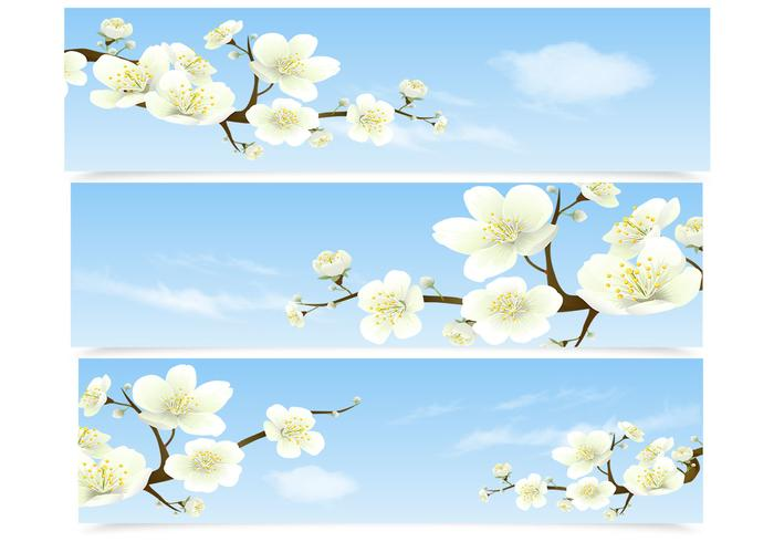 Cherry Blossom Banner PSD Set
