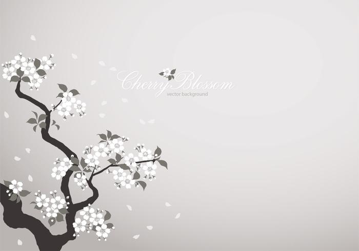 White Cherry Blossom Background PSD