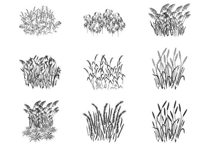 Reed Grass Plant Silhouettes Brushes