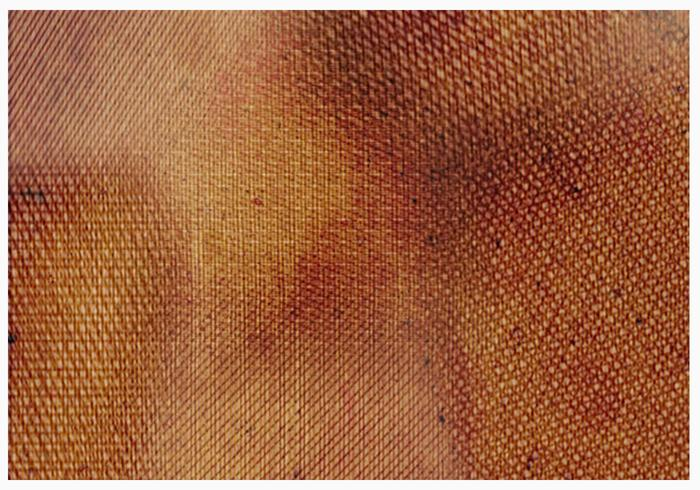 Pacote de escovas de textura de tecido