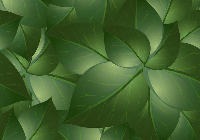 Green Leaf Backgrounds