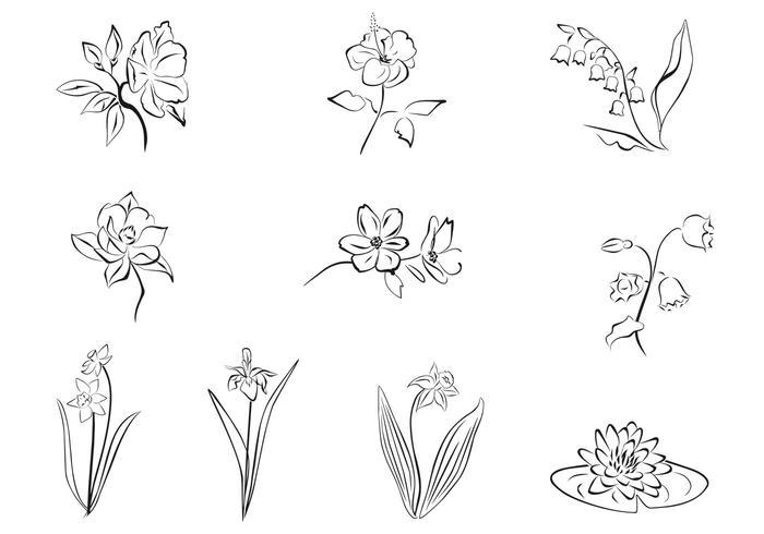 Pinceles de flores dibujados