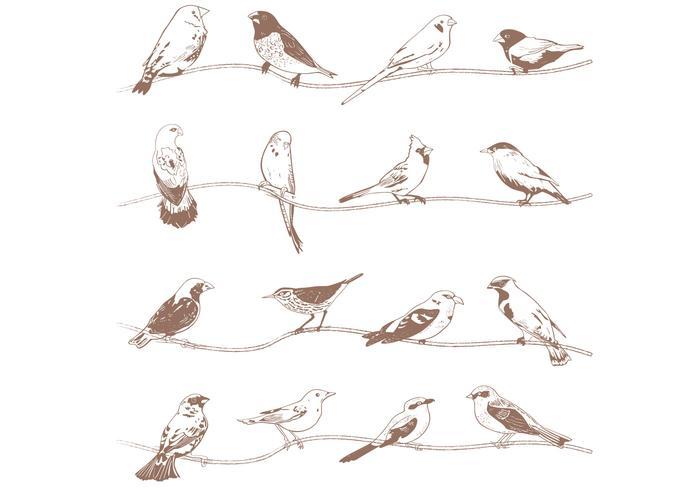 Handdragen fågelborstar