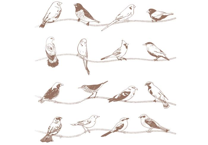 Handgezogene Vögel Pinsel