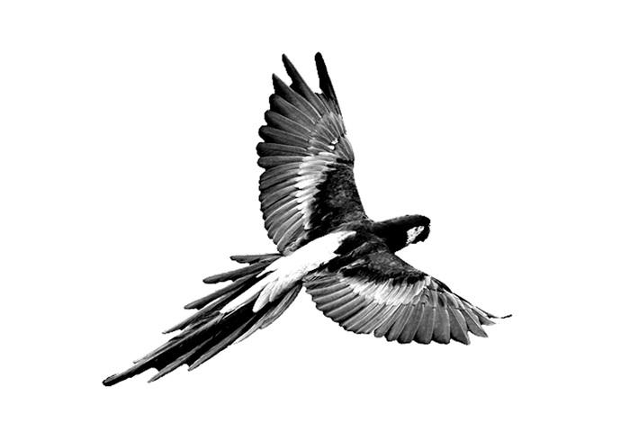 Parrot PSD