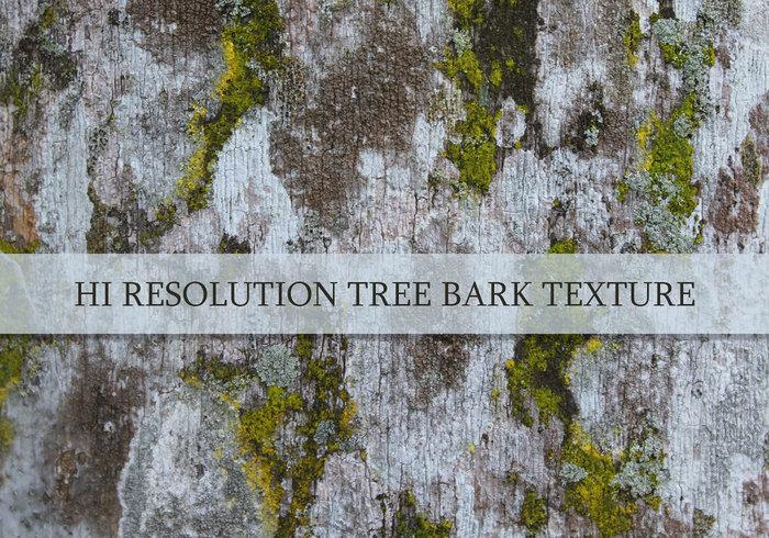 Träd bark konsistens