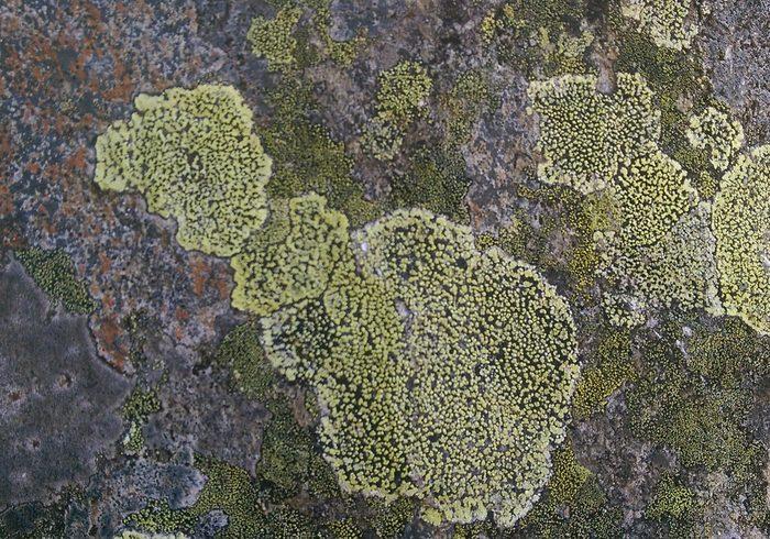 Texturas de pedra de montanha