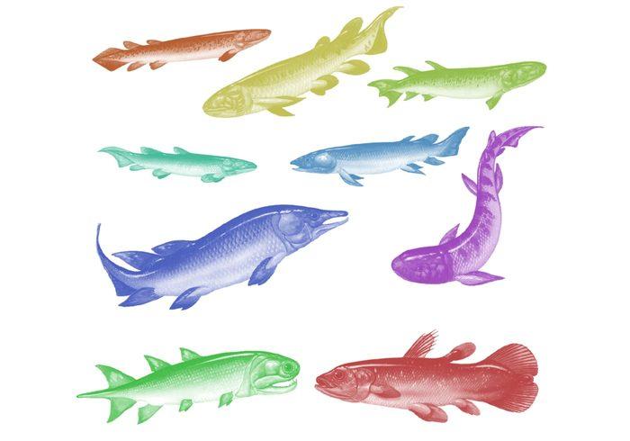 Cepillos carnosos de pescado