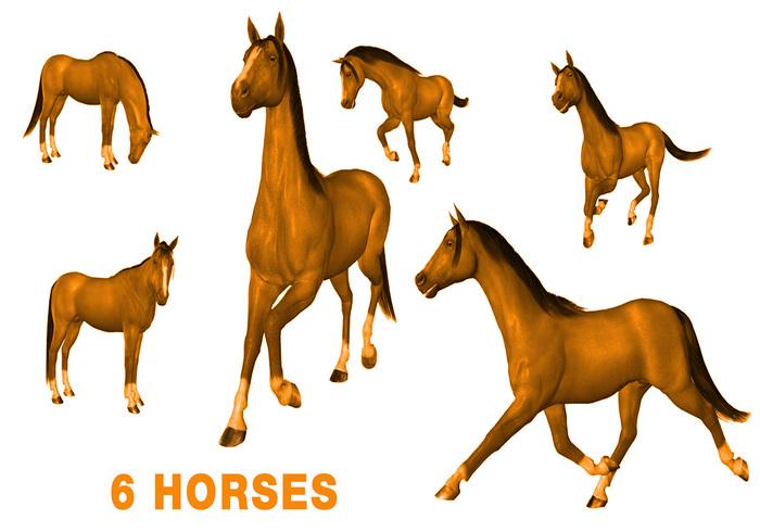 6 HORSE BRUSHES