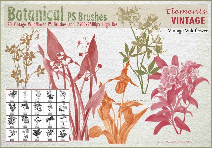 Vintage Wildflower PS Brushes