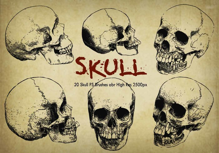 "20 Skull PS Brushes abr ""Graverade"" vol.6"