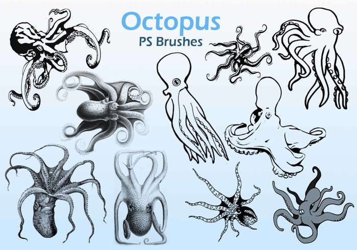 20 Octopus PS escova abr.