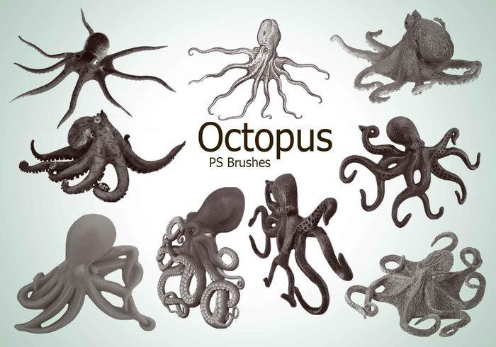 20 Octopus PS Brushes abr.vol.3