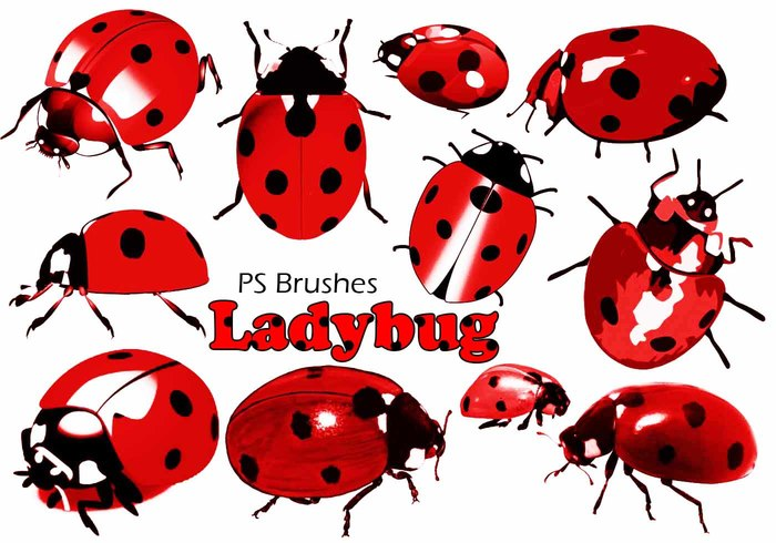 20 Ladybug PS Brushes abr.Vol.5