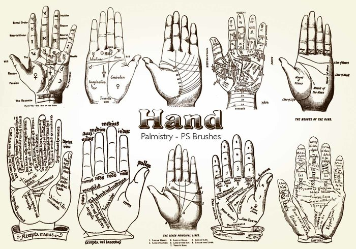 20 Hand Palmistry PS Brushes abr.Vol.11
