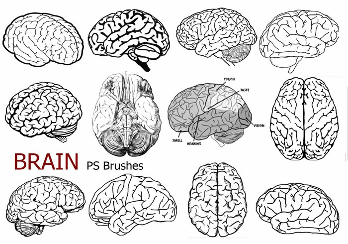 20 Brain PS Brushes ABR. Vol.6