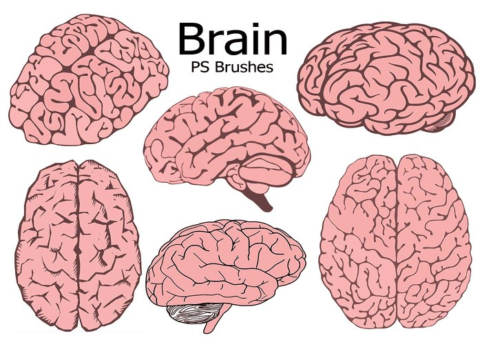 20 Brain PS Brushes abr. Vol.7
