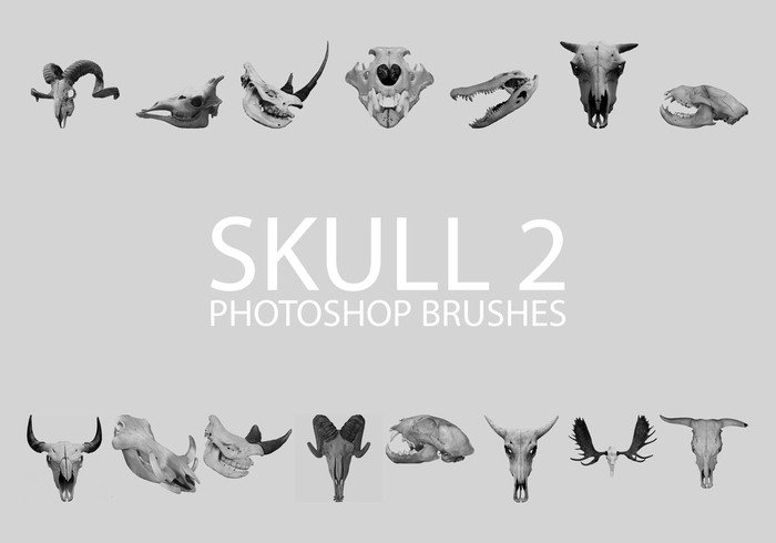 Free Skull Photoshop Brushes 2