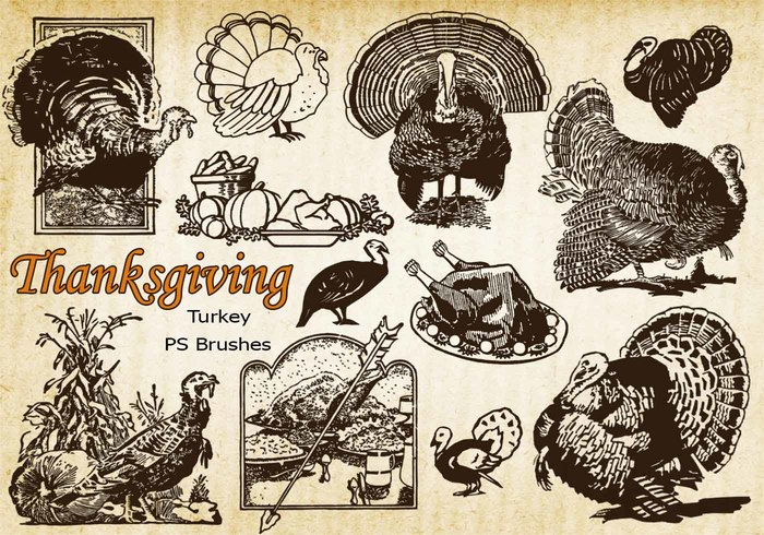 20 Thanksgiving Vintage Turkey PS Pinsel abr. Vol.10