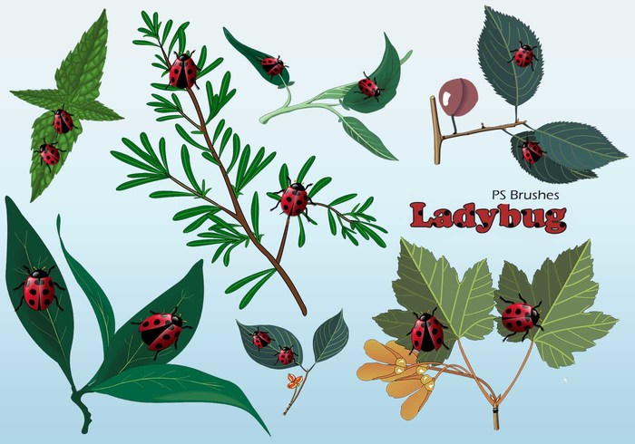 20  Ladybug PS Brushes abr.Vol.12
