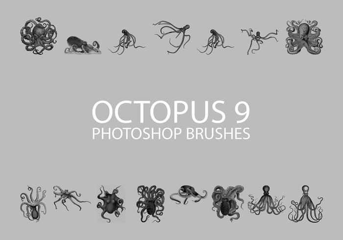 Free Octopus Photoshop Brushes 9