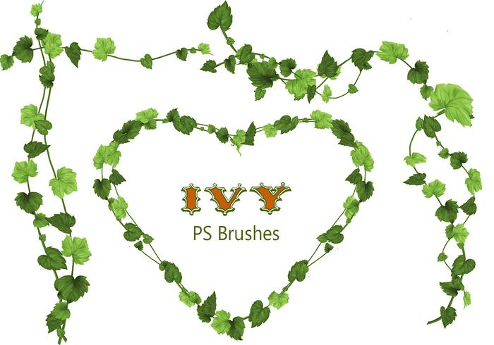 20 Ivy PS Brushes abr vol.3