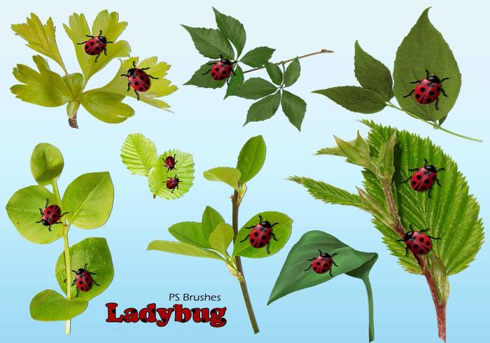 20 Ladybug PS Brushes abr.Vol.13