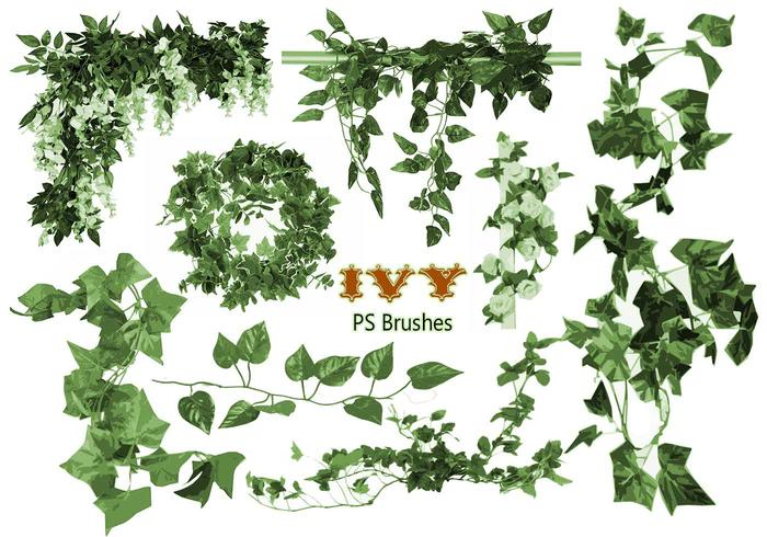 20 Ivy PS Brushes abr vol.1