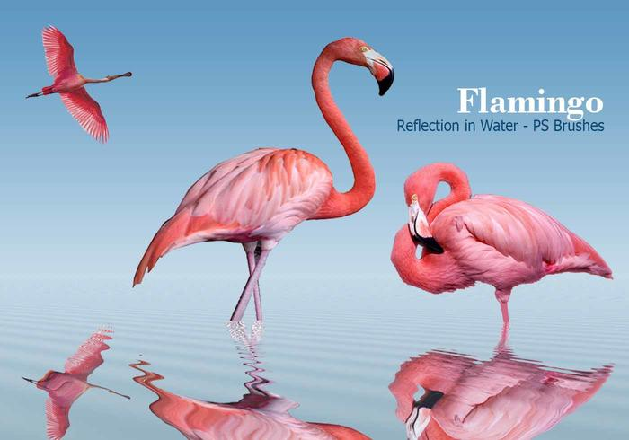 20 Flamingo PS Bürsten.abr Vol.2