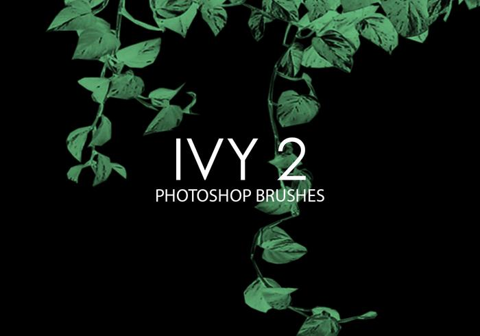 Ivy Photoshop Brushes 2