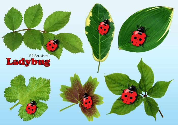 20 Ladybug PS Brushes abr.Vol.14